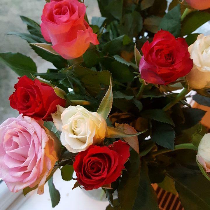 bildebank-roser